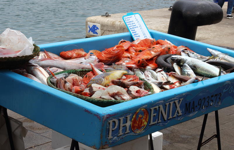 Fish mix in Marseille harbour, France stock photos