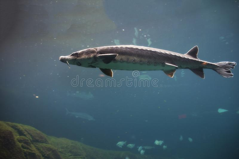 Fish at the Montreal Biodome in Montreal Quebec Canada. A picture of fish at the Montreal Biodome in Montreal Quebec Canada royalty free stock image