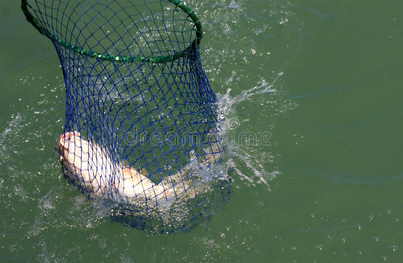 Download Fish Net stock image. Image of fins, lifted, fishing - 13932679