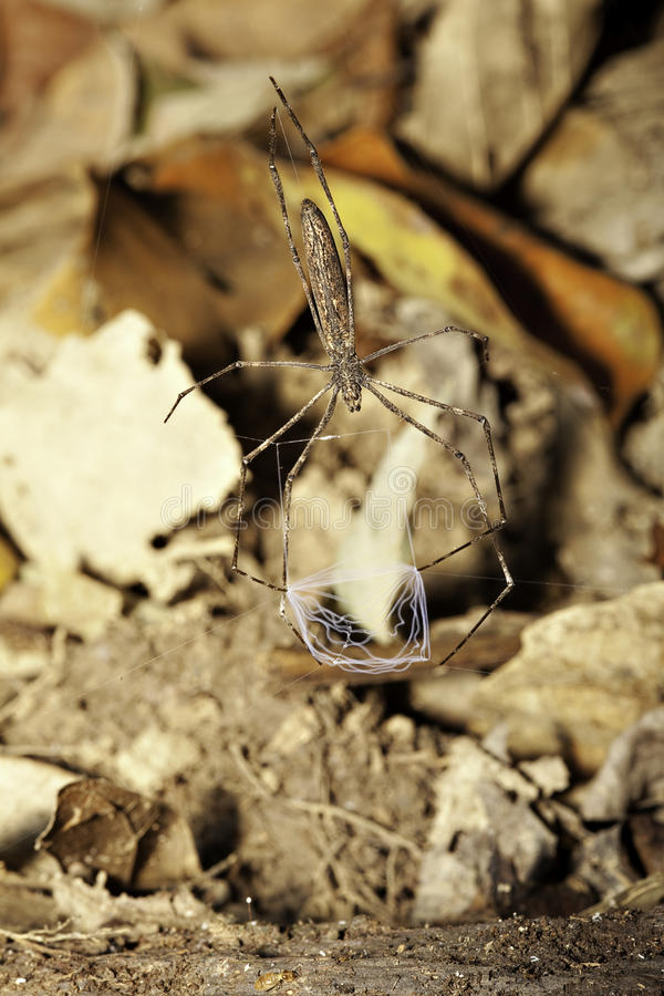 Fish net spider royalty free stock image