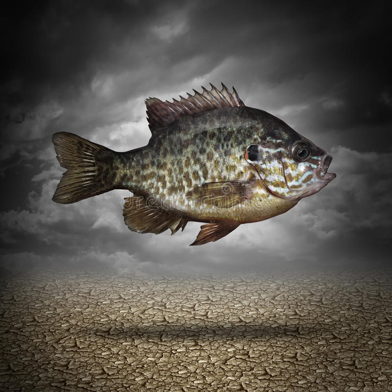 Fish Out Of Water. As a business or lifestyle metaphor for adapting to changes in the environment as an aquatic animal floating above dried cracked ground as a vector illustration