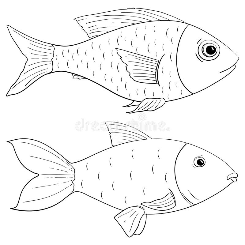 Fish outline drawing. Vector illustration isolated on white background royalty free illustration