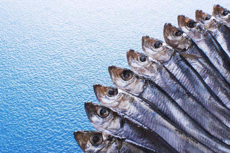 Fish pattern. Anchovies with slice of lemon on a black stone on a blue sea background. Fish caught in the Ionian Sea royalty free stock image