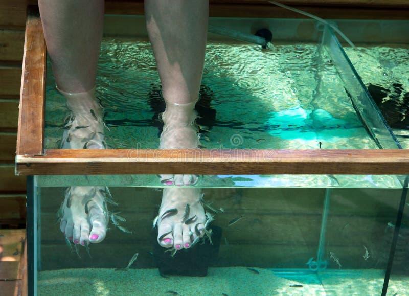 Download Fish pedicure stock photo. Image of salon, beauty, foot - 21678608