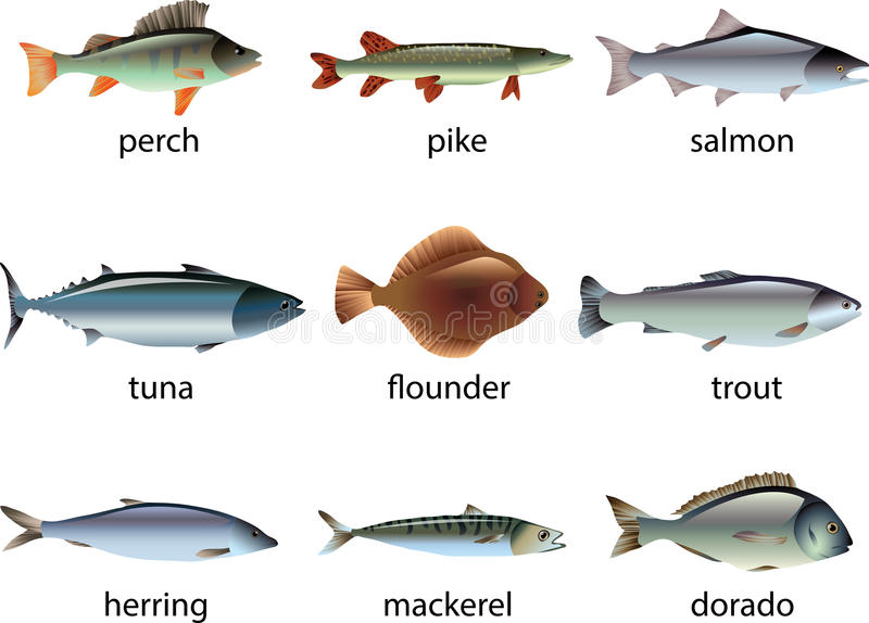 Fish photo-realistic set. Fish photo-realistic detailed set vector illustration