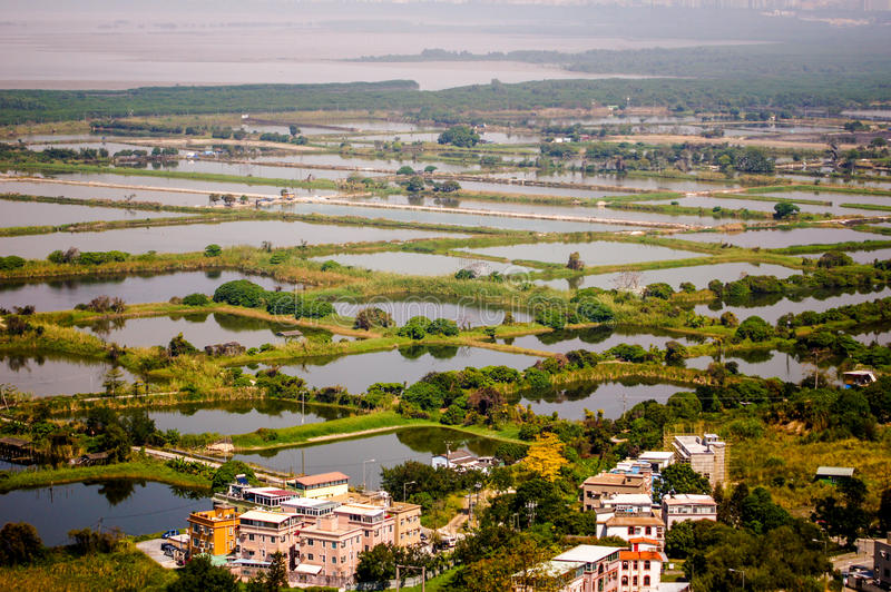 Fish pond in New Territories. In Hong Kong royalty free stock images