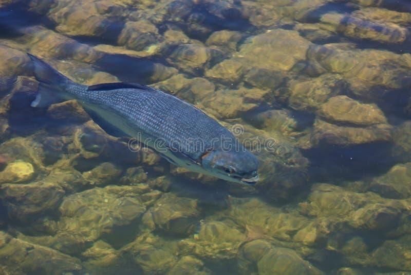Fish pond stock photos