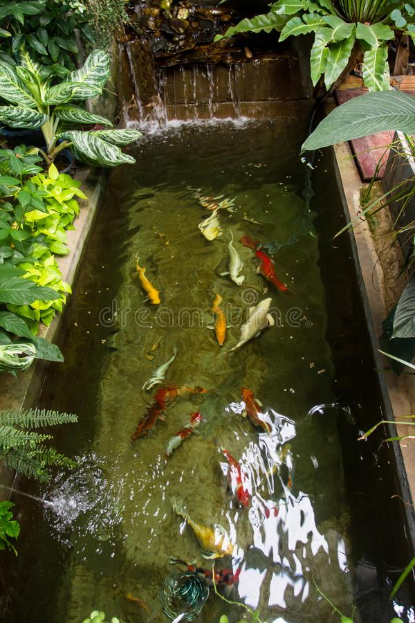 Fish pond was beautifully decorated In the backyard or in the store. stock photo