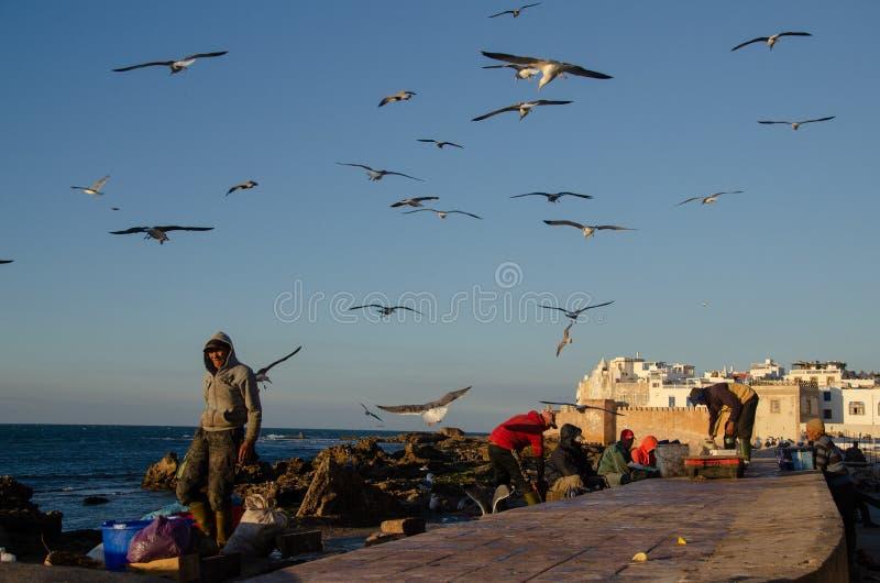 Fish port in Essaouira Marocco, January 2019 royalty free stock image