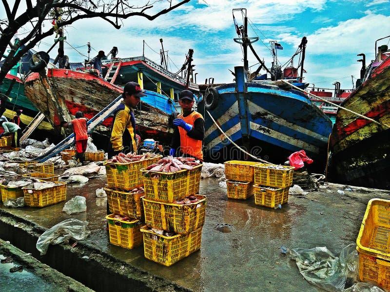 Fish port royalty free stock photos