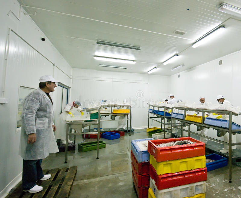 Fish processing stock photo