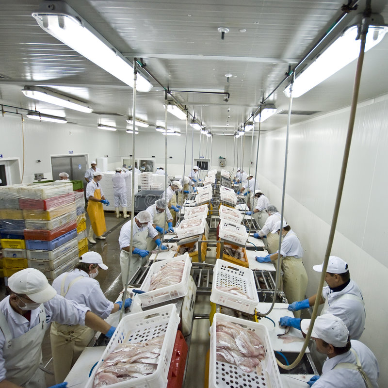 Fish processing factory stock images