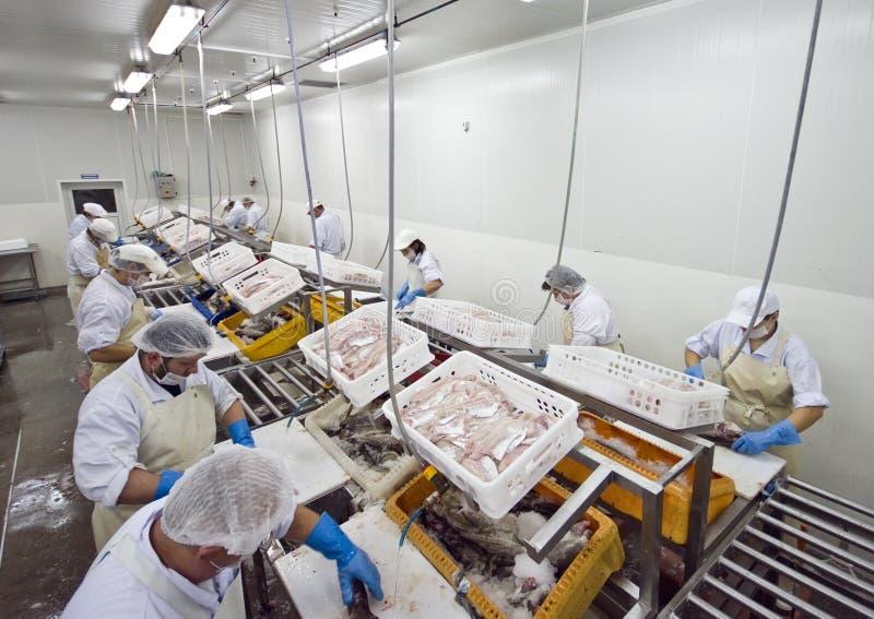 Fish processing factory stock photos