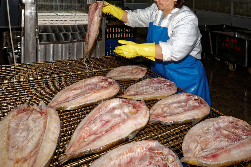 Fish processing, fish factory stock images