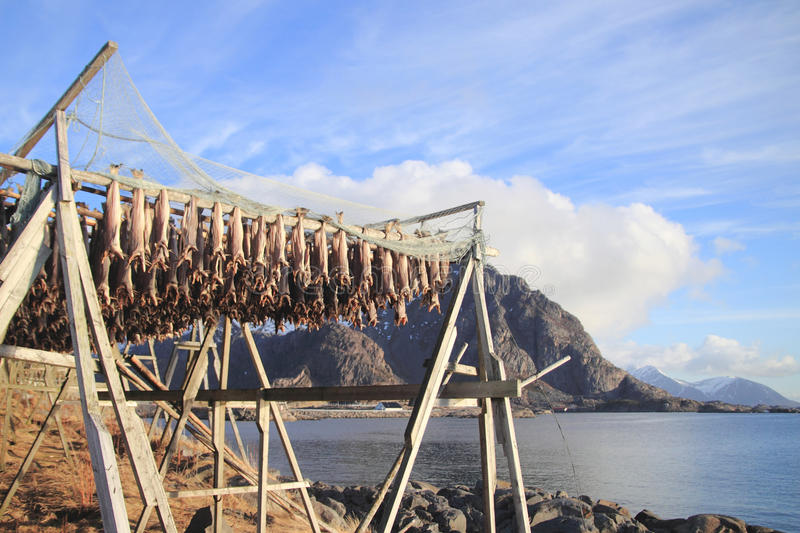 Fish racks and Lofoten mounts. Traditional Lofoten racks to hang the fish to get dry, Lofoten mounts on the background stock images