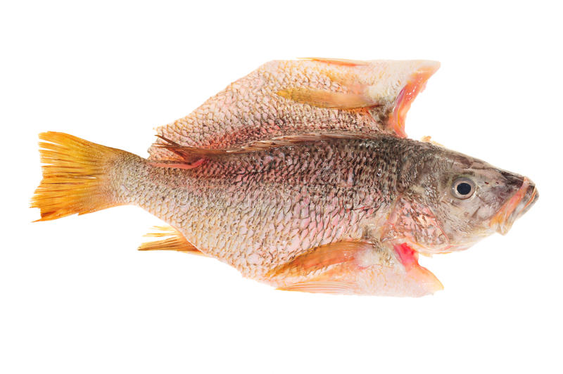 Download Fish Ready For Cooking stock photo. Image of diet, gourmet - 22198514