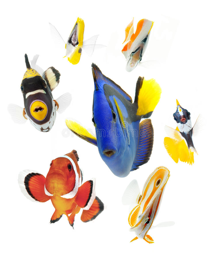 Fish, reef fish, marine fish party isolated on whi royalty free stock photo
