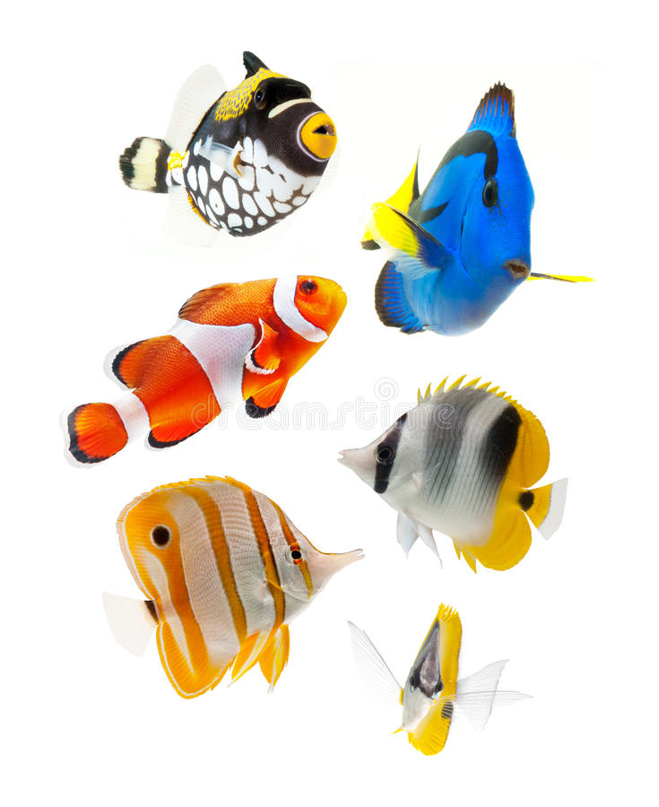Fish, reef fish, marine fish party isolated on whi stock photography