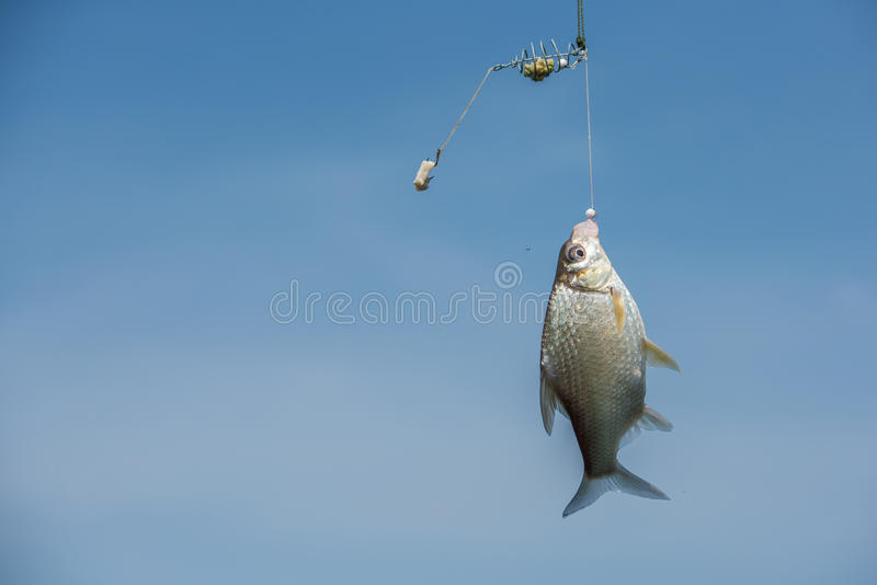 A fish rise to the bait royalty free stock photography