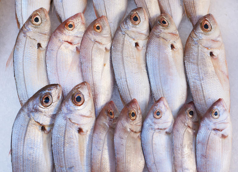 Download Fish for sale on market stock photo. Image of paca, france - 36656834