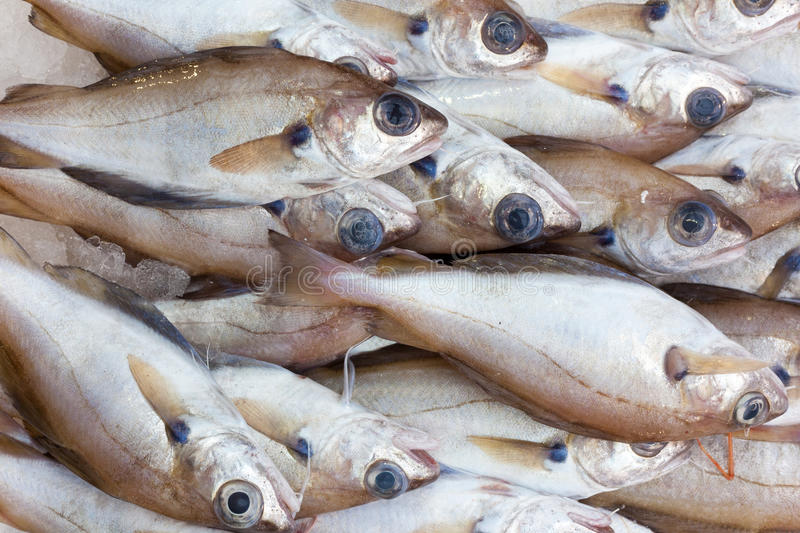Fish for sale. Small dead large eyed fish for sale royalty free stock photo