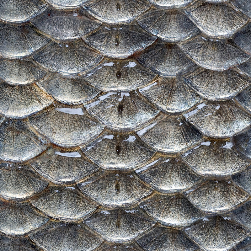 Fish scales seamless pattern. Seamless pattern from photo of fish scales royalty free stock images