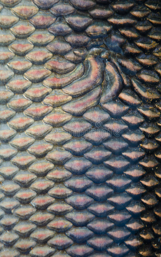 Download Fish scales texture stock image. Image of aquarium, exoticism - 22369831