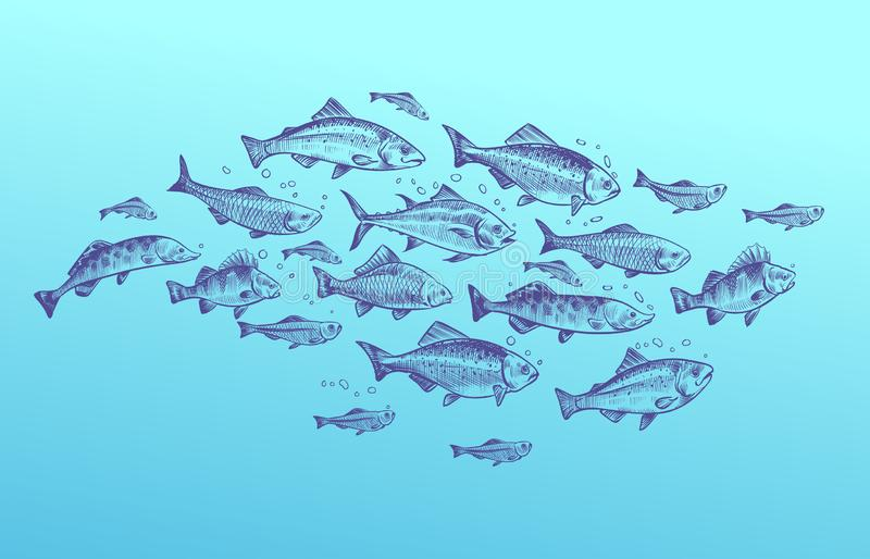 Fish school. Fishes group hand drawn sketch. Restaurant delicacy seafood menu dorado mackerel tuna fresh food design stock illustration