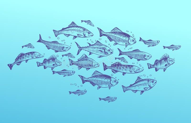 Fish school. Fishes group hand drawn sketch. Restaurant delicacy seafood menu dorado mackerel tuna fresh food design. Fish school. Fishes group hand drawn sketch stock illustration
