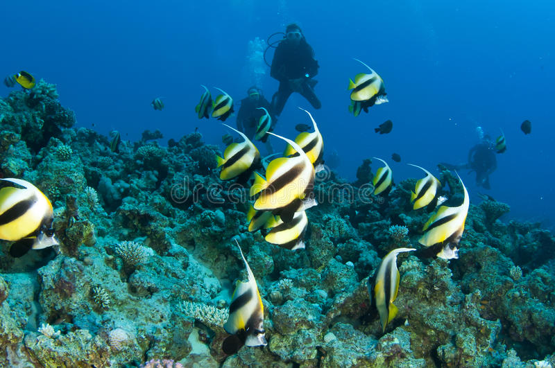 Download Fish and scuba divers stock photo. Image of diver, scuba - 24559546