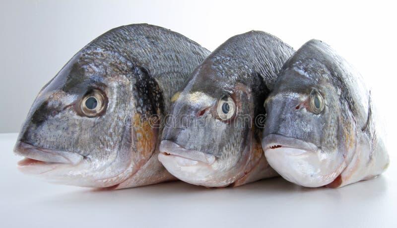 Fish, sea bream. On white stock photos