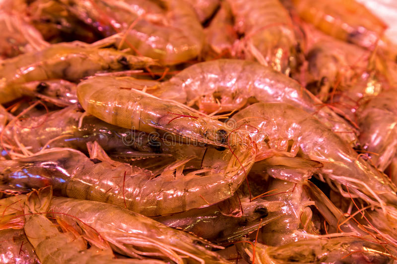 Fish and seafood market at the famous Boqueria in Barcelona of S. Pain royalty free stock image