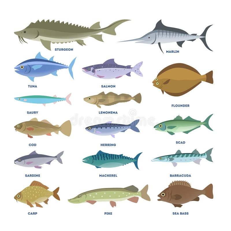 Fish set. Collection of the aquatic fauna. Fish set. Collection of aquatic fauna. Sturgeon and carp, pike and tuna. Underwater creature vector illustration