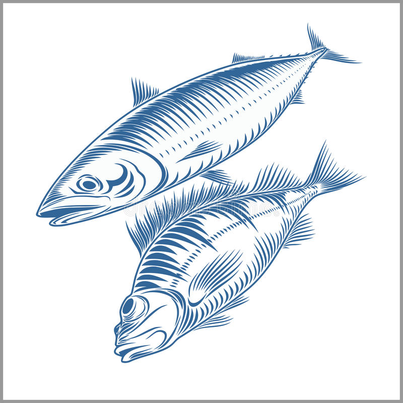 Fish set - sea bass, mackerel royalty free illustration