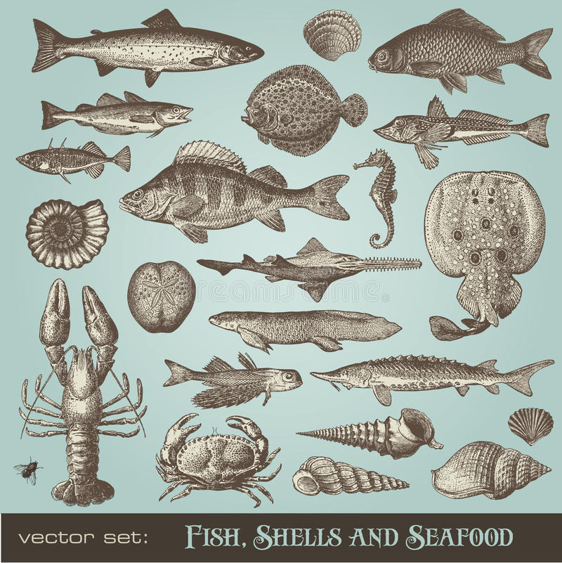 Fish, shells and seafood. Set of different sea-related design elements