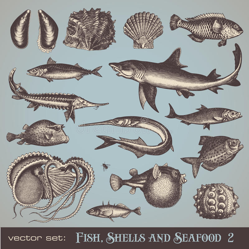 Fish, shells and seafood (set 2). Collection of various vintage animal illustrations