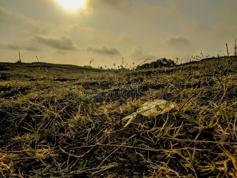 Fish skeleton on grass. And click the summer days in sunset with clouds royalty free stock images