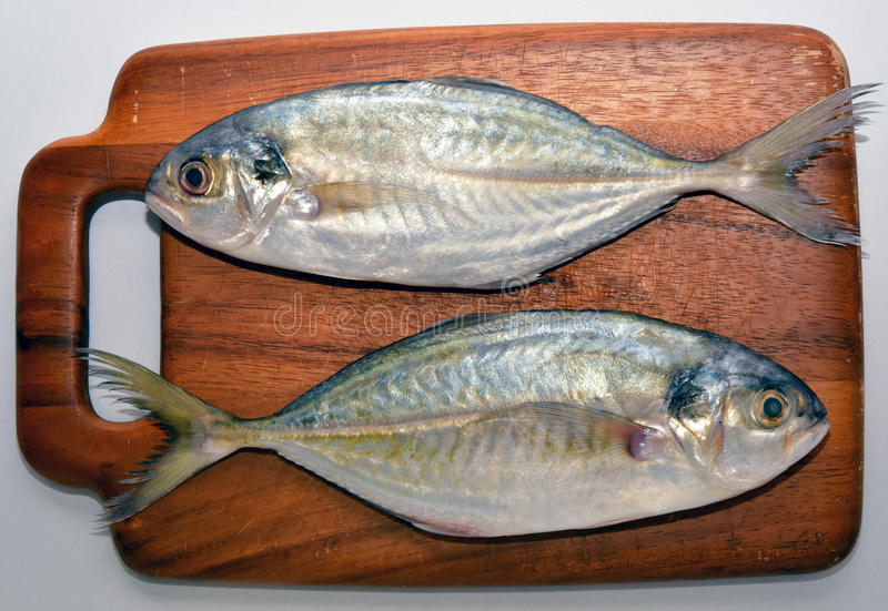 Fish. A fish that is on the slat wood stock images