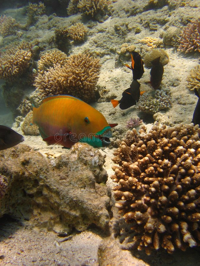 Download Fish smile stock image. Image of swim, polyps, corals - 1322357