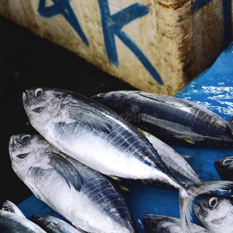 Fish Sold in a Wet Market stock photos