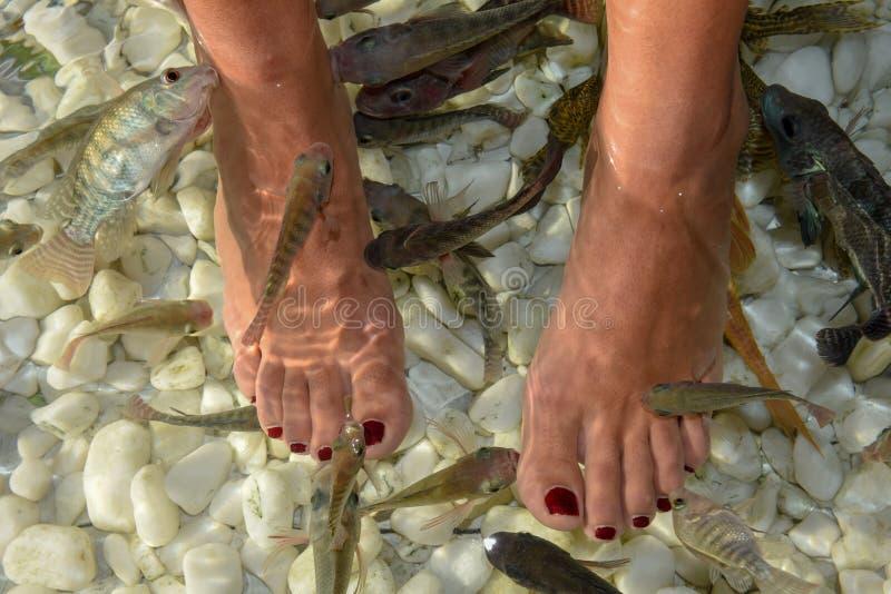 Fish spa επεξεργασία φροντίδας δέρματος pedicure ποδιών στη Μπανγκόκ στοκ φωτογραφία με δικαίωμα ελεύθερης χρήσης