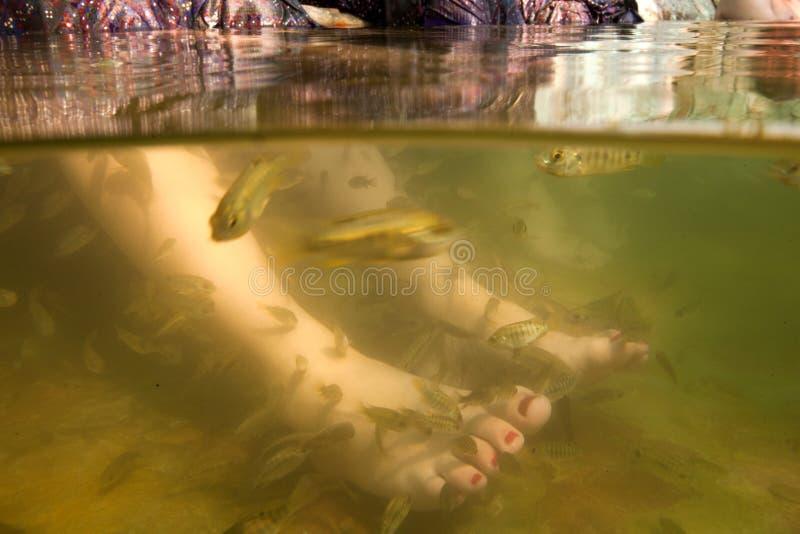 Download Fish Spa Feet Pedicure Skin Care Treatment Stock Image - Image: 28956965