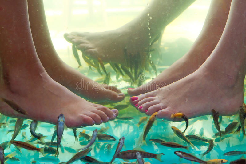 Download Fish spa pedicure of feet stock photo. Image of background - 27795238