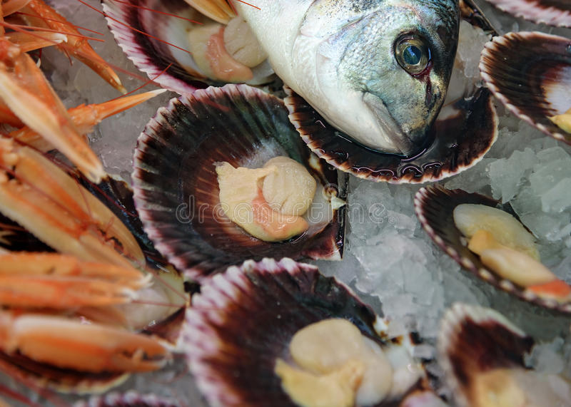 Fish still life. Dorado head, mussels in shells on ice. Fresh mix seafood royalty free stock photography