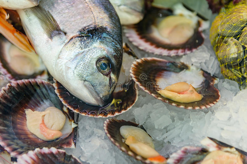 Fish still life. Dorado head, mussels in shells on ice. Top view. Close up royalty free stock photography