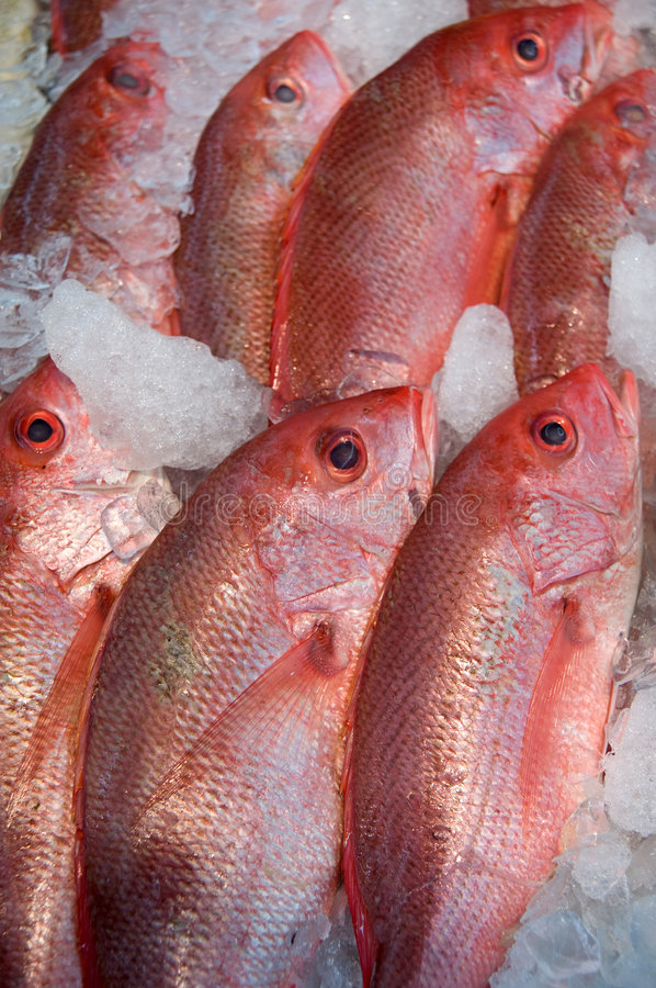 Fish in supermarket stock image