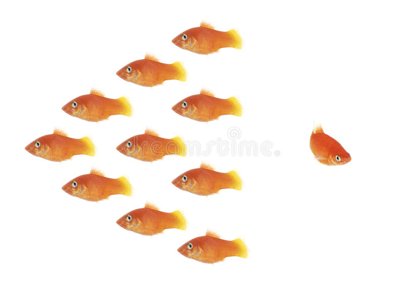 Fish swarm royalty free stock photography