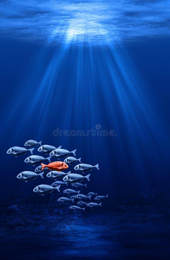 Fish swarm - individualism stock images
