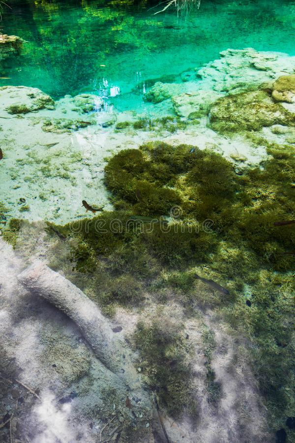 Fish swim in the crystal clear turquoise lake. Plitvice, National Park, Croatia.  royalty free stock image