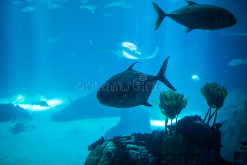 Fish swimming in a reef with blue ocean water aquarium. royalty free stock images